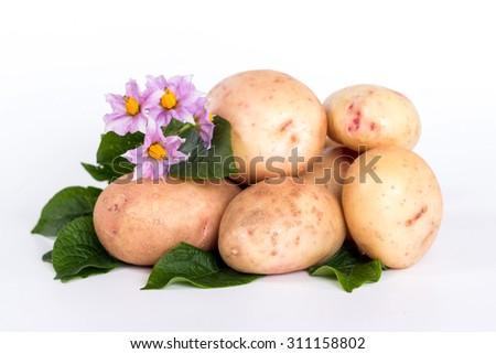 fresh ripe potatoes and flower isolated on white background - stock photo