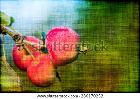 Fresh ripe red apples with drops of rain on a branch of an apple tree in grunge style - stock photo