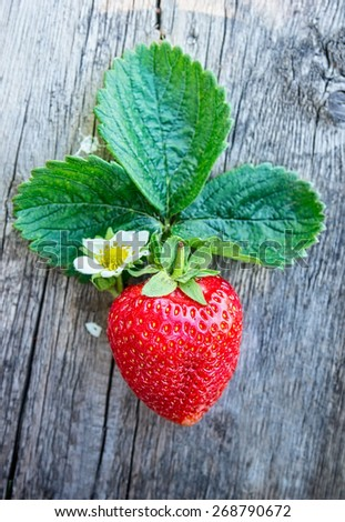 Fresh ripe strawberry with flower and leaves on dark wooden background, close up - stock photo