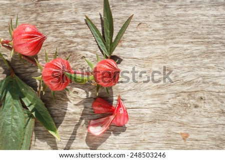 Fresh roselle fruits or Hibiscus sabdariffa on wooden table - stock photo