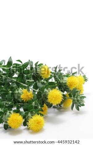 Fresh Safflowers isolated on white background  - stock photo