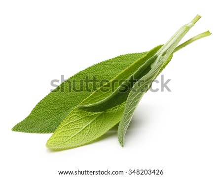 Fresh sage leaves isolated on white background - stock photo