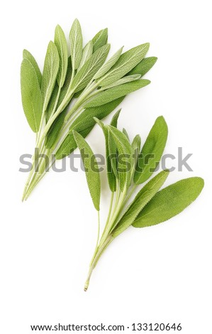 Fresh sage leaves on white background