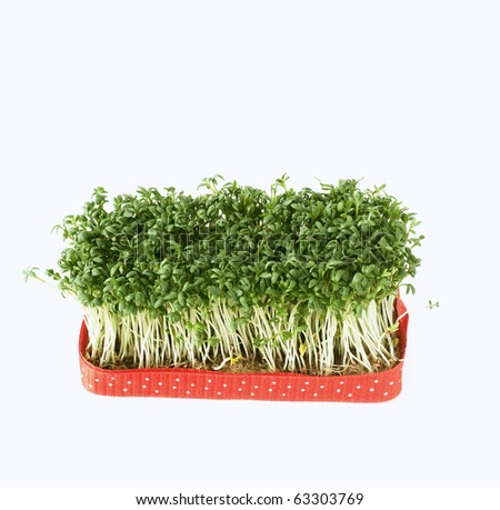fresh salad cress - stock photo