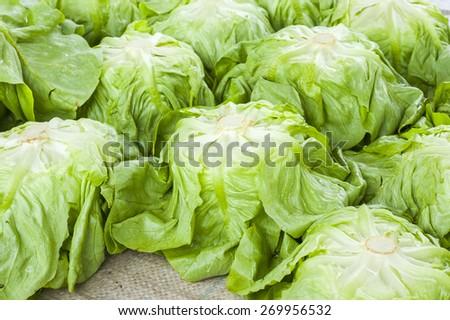 Fresh salad lettuce - stock photo
