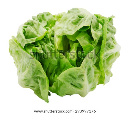 Fresh salad romaine lettuce isolated on white background. Top view. Design element for product label. - stock photo