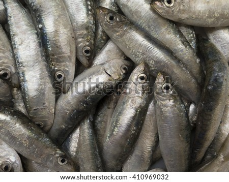Fresh salt sea sardine  - stock photo
