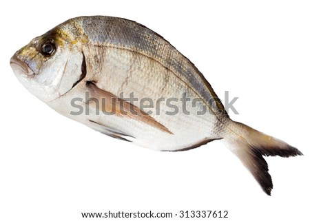 fresh sea bream fish (Sargo) isolated on white - stock photo