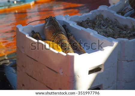 Fresh sea food on a boat - stock photo