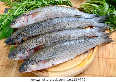 Fresh sea grey mullet with green rocket leaves ready to cooked