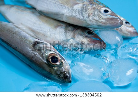 Fresh Seabasses with Ice on blue background