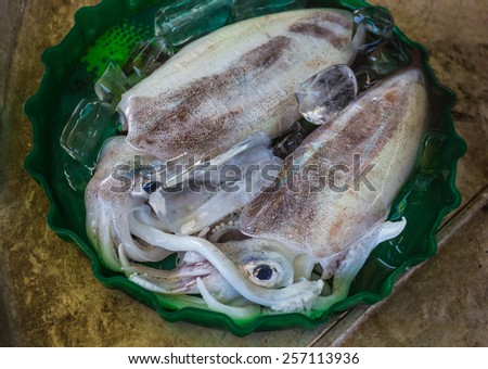 Fresh seafood photographed in fish market, squid - stock photo