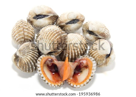 Fresh Shellfish Blood Cockles isolate on white - stock photo