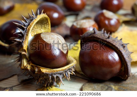 Fresh Shiny Chestnuts with Open Husk on an Old Rustic Wooden Table with Brown Autumn Leaves  - stock photo
