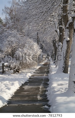 Fresh snow on trees and shrubs with shoveled sidewalk showing signs of melting - stock photo