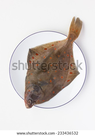 Fresh sole fish on the white background - stock photo
