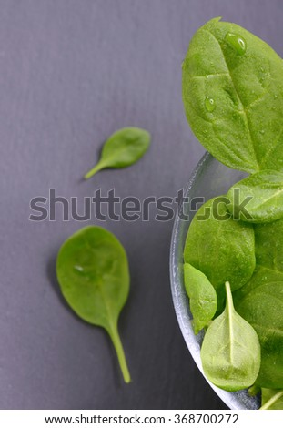Fresh spinach leaves and water drops - stock photo