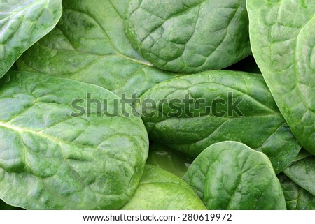 fresh spinach leaves background - stock photo