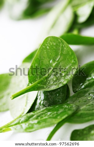 Fresh spinach leaves with drops of water on white background