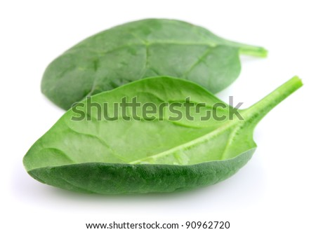 Fresh spinach on a white background. Contains many vitamin - stock photo