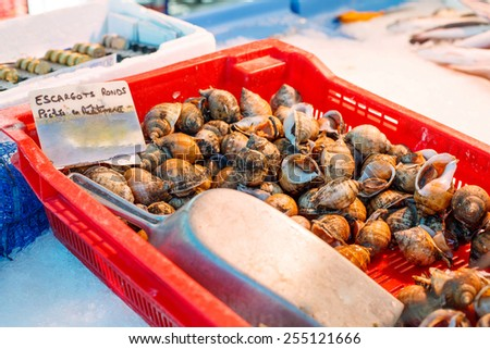 Fresh Spotted babylon snails and escargots on farmer market ready for sale and use for ingredient - stock photo