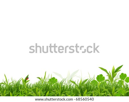 Fresh spring background isolated on white background - stock photo