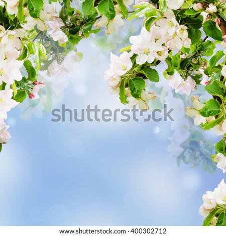 Fresh spring branches of apple tree with flowers, natural floral seasonal easter background. Suitable for greeting cards and invintation. - stock photo