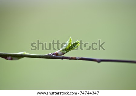 Fresh spring bud on green de focus background