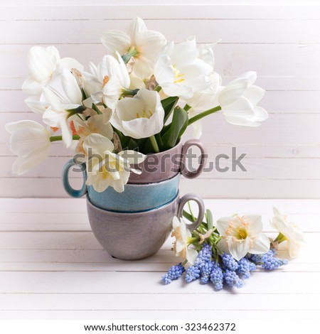 Fresh spring daffodils,  white tulips flowers, muscaries flowers   on white wooden planks. Selective focus. Square image.