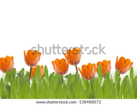 Fresh spring flowers tulips and grass. Floral background.