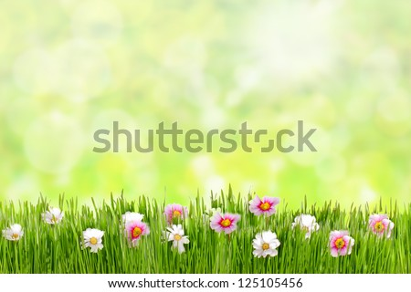 Fresh spring grass with flowers on a sunny day with natural blurred background - stock photo