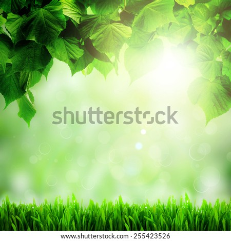 Fresh spring green field grass with green bokeh and sunlight backgrounds - stock photo