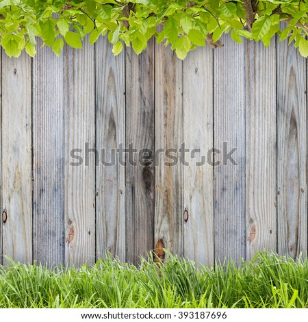 Fresh spring green grass and green leaf plant on old wood background - stock photo