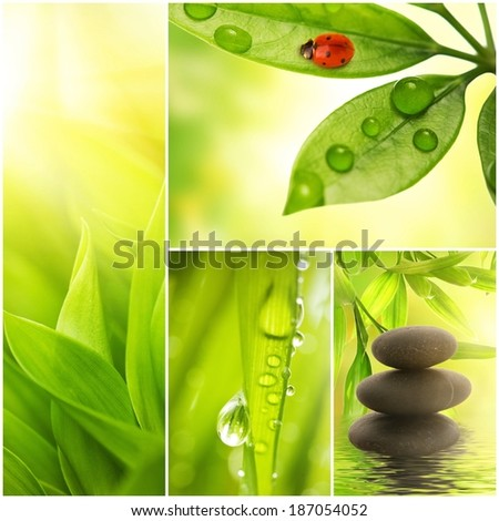 Fresh spring green grass collage  - stock photo