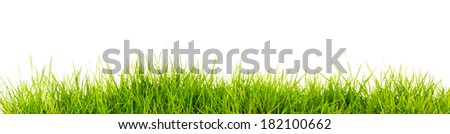 Fresh spring green grass with soil isolated on white background. - stock photo