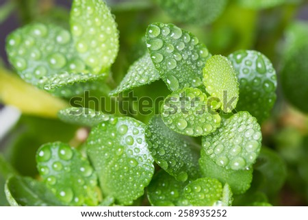 Fresh spring green leafs - stock photo