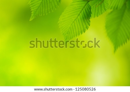 Fresh Spring Green Leaves Over Blurred Bright Background - stock photo