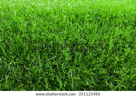 fresh spring lawn of green grass - stock photo