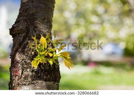 Fresh spring leaves in garden - stock photo