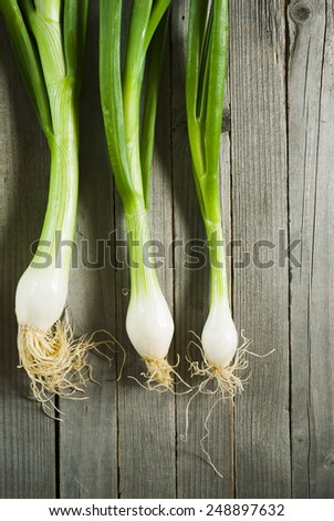 fresh spring onions with root on weathered wooden table