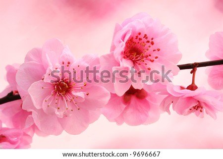 Fresh, spring tree blossoms on pink background. - stock photo
