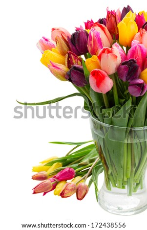 fresh spring tulips  in vase close up  isolated on white background - stock photo
