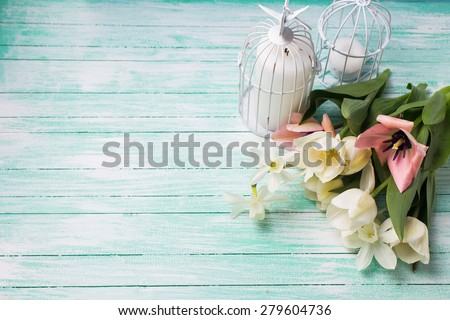 Fresh  spring white and pink  tulips and narcissus flowers, candles in decorative bird cages  on turquoise  painted wooden background. Selective focus. Place for text.  - stock photo