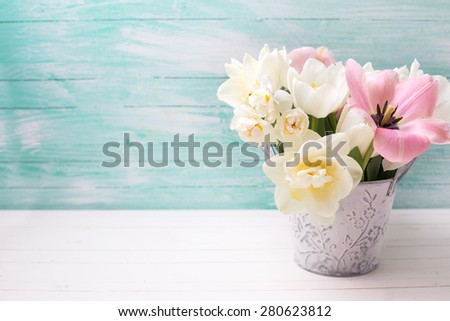 Fresh  spring white and pink  tulips and narcissus in  grey bucket on white painted wooden background against turquoise wall. Selective focus. Place for text.  - stock photo