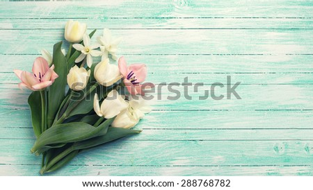 Fresh  spring y\ tulips and narcissus flowers on turquoise  painted wooden background. Selective focus. Place for text. Toned image. - stock photo