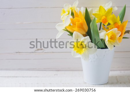 Fresh  spring yellow narcissus and  tulips flowers in bucket  on white  painted wooden planks. Selective focus. Place for text.  - stock photo