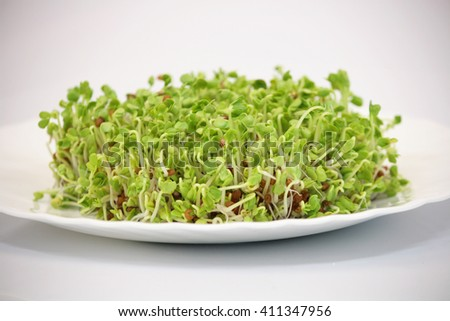 Fresh sprouts for healthy food salad - stock photo