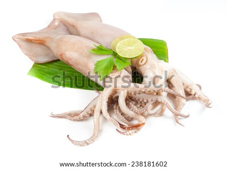 fresh squid with lemon and parsley isolated on white - stock photo