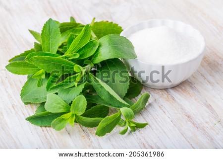 fresh stevia leaves - stock photo