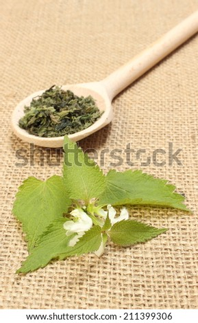 Fresh stinging nettles with white flowers and dried nettle on wooden spoon lying on jute canvas